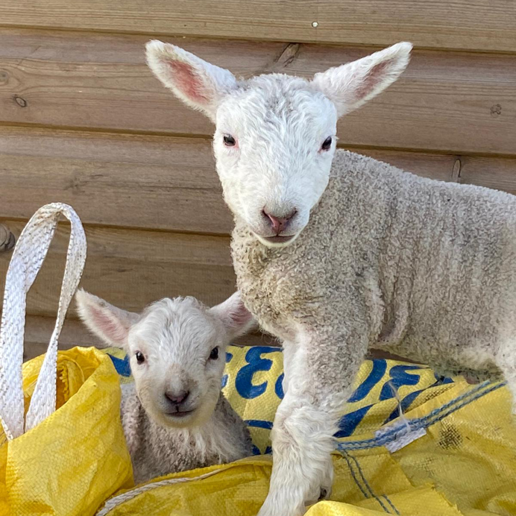 LAMBS_RISBY_HOMES